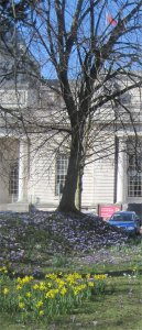 cardiff museum in spring by Juliamaud